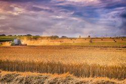 Landwirtschaftliche Entwicklung