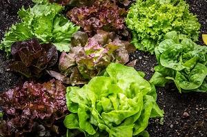 Salat_frisch