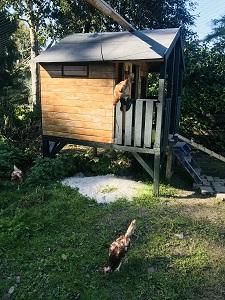 Hühner_Stall